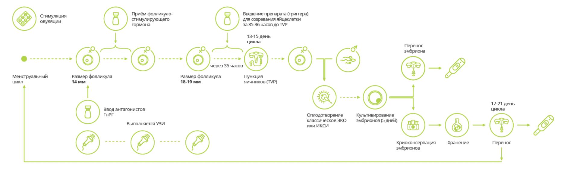 модифицированный протокол эко в естественном цикле