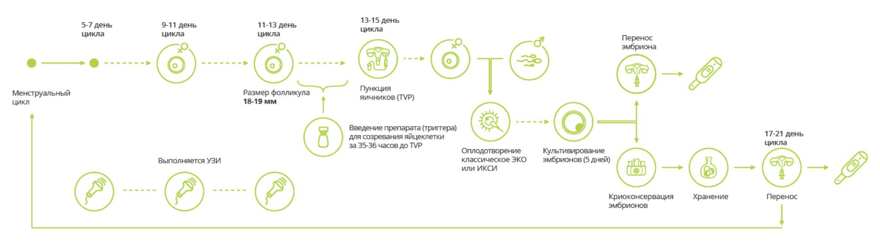 протокол эко в естественном цикле