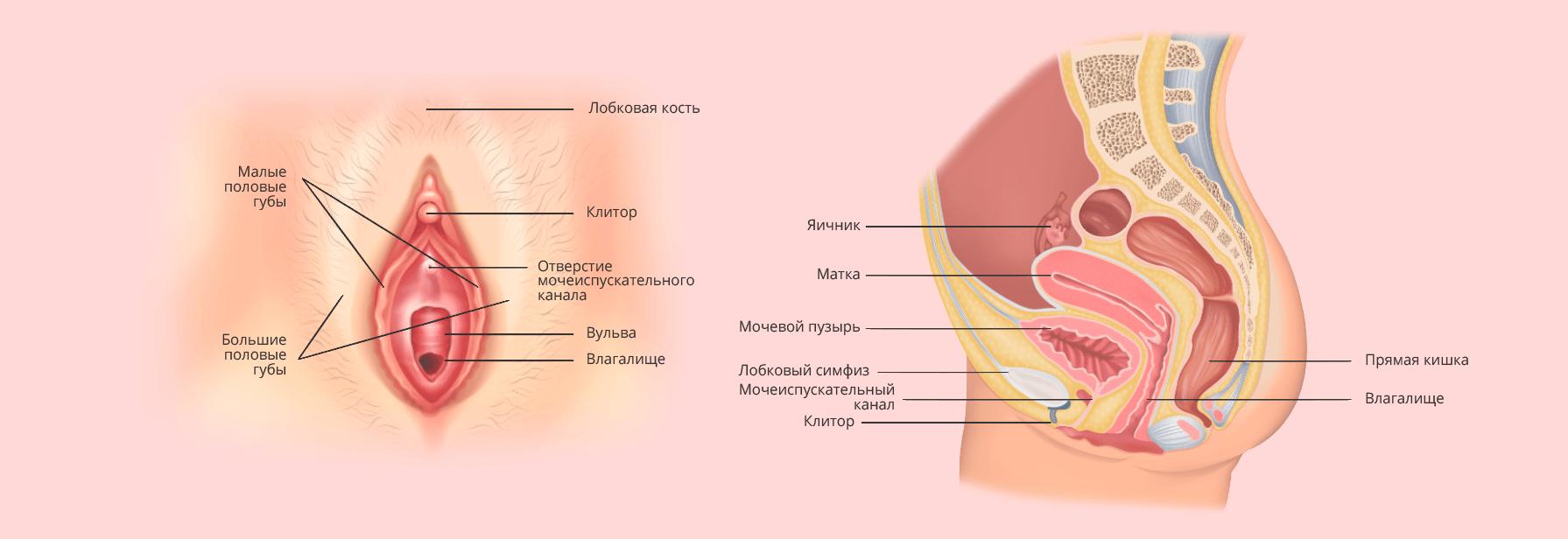 Девочки клитор в сперме