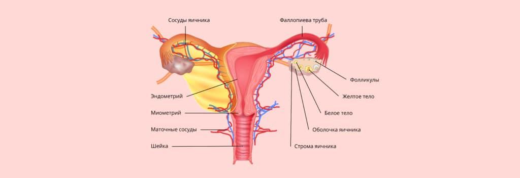 причины и лечение женского бесплодия
